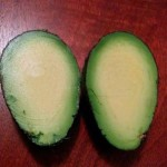 A prefect avacado