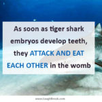 As soon as tiger shark embryos develop teeth, they attack and eat each other in the womb