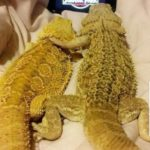 Horror movie for lizard