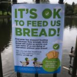 It's okay to feed the ducks bread now